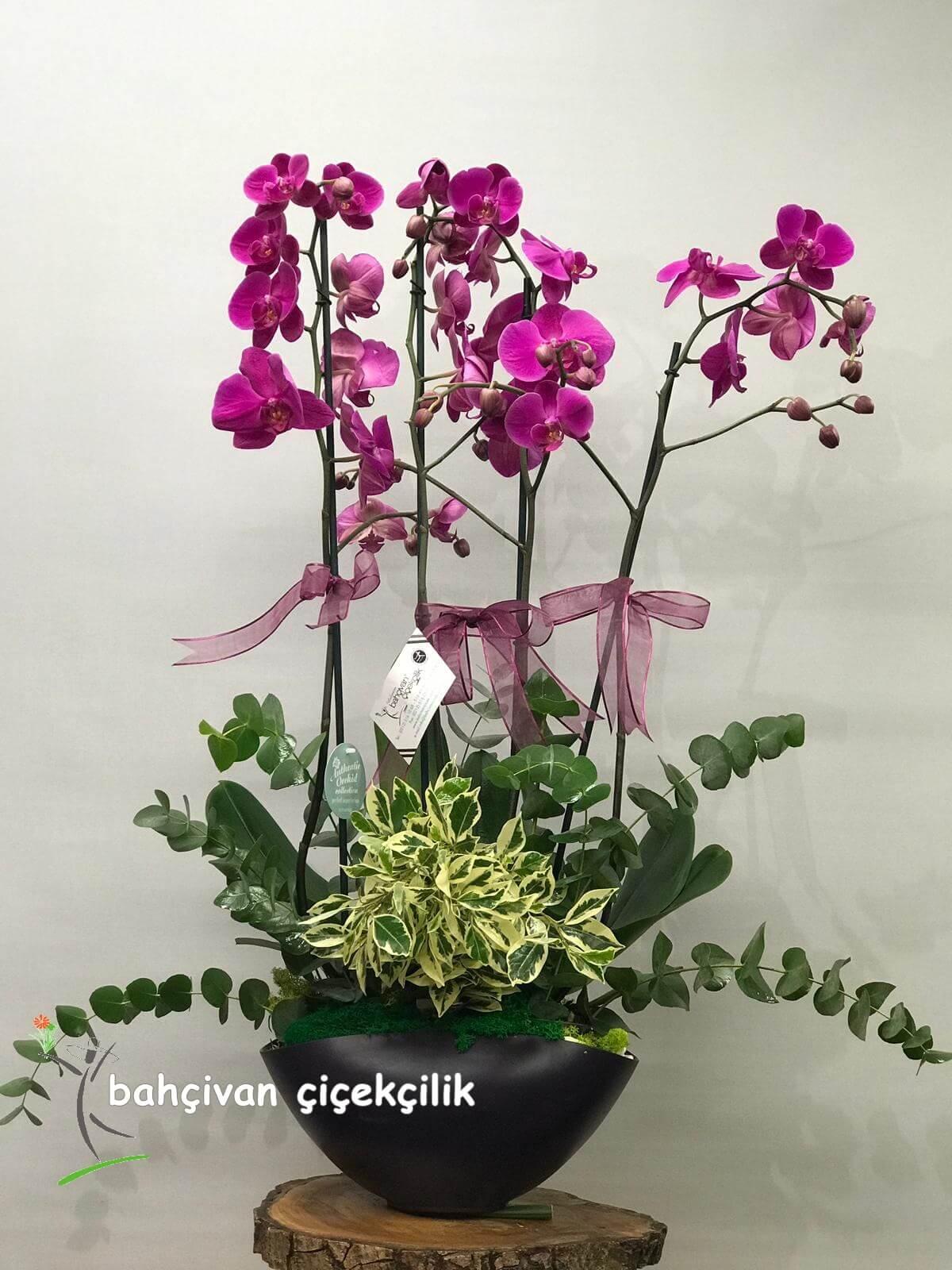 Dörtlü Mor Orkide Tasarýmý