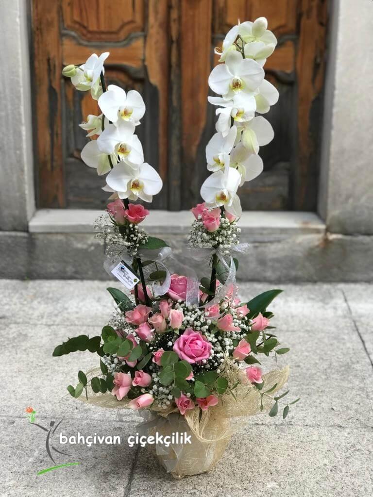 çiftli beyaz orkide ve pembe gül