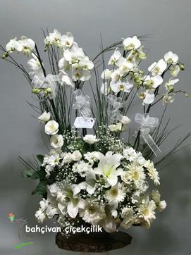 ihtiþamlý orkide aranjmaný