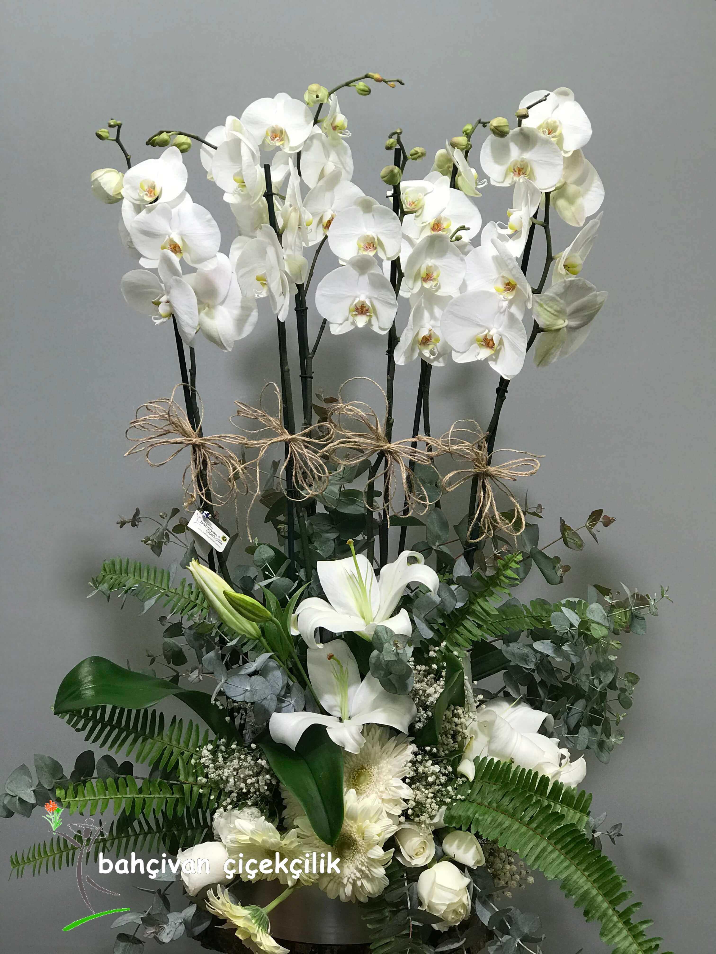 Orkide Þöleni